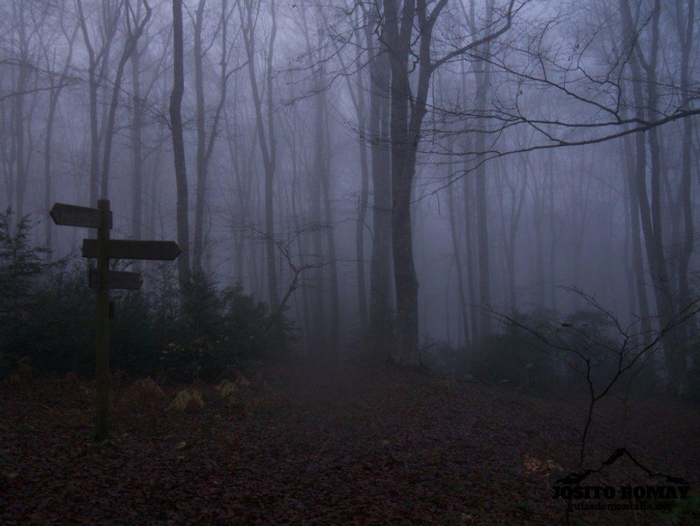 Cresta del Palomares, hayedo en la niebla